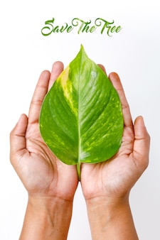 Save tree concept green leaf on hand