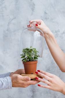 자연을 보호하는 세상을 구하십시오. 개념적 구성. 인간의 손에 의해지지되는 유리 돔에 고정 된 가정 식물.