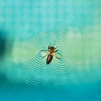 Saving life concept. bee saving life at water surface.