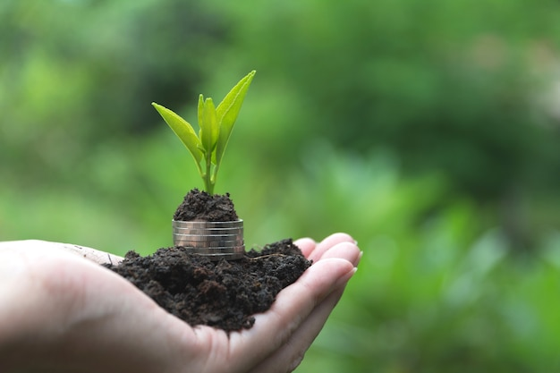 Saving money concept with hand holding money coin stack and plant.