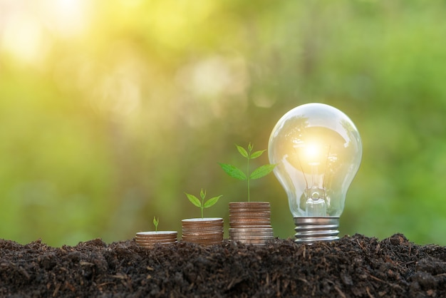 Saving money and saving energy concept. tree growing up on coin, and light bulb on the soil.