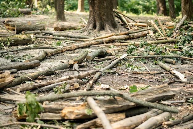 Пиленные ветки в лесу на поляне. вырубка деревьев концепция.