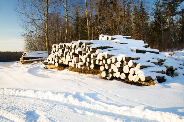 The sawed-down trees used for logs