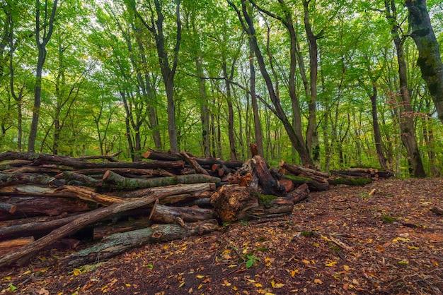 Пиленные деревья в зеленом лесу