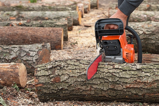 Sawing a tree with a chainsaw.
