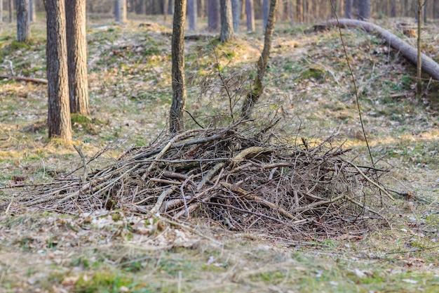 森の中で乾いた枝を切りました