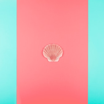 Scallop seashell on coral and mint background