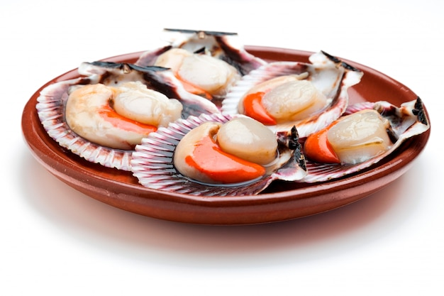 Scallops fresh, raw and clean on clay plate
