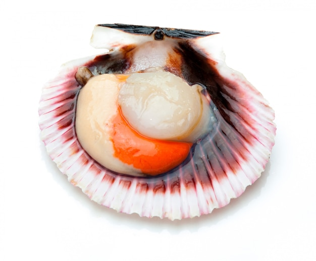 Scallops fresh, raw and clean on white