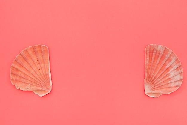 Seashells dei pettini su priorità bassa di corallo con lo spazio della copia per la scrittura del testo