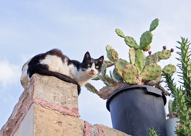 Scared cat on fence and cactus