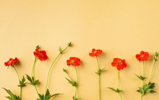 Yellow sgra色の花が黄色に引き寄せる