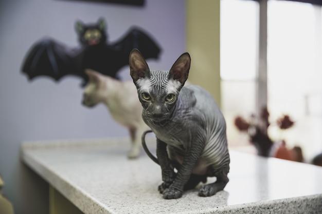 Страшный черный молодой донский сфинкс кошка с черной бумажной летучей мышью