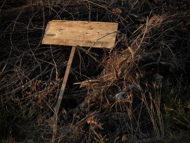 Scary empty wooden plaque lies on dry branches. copy space. halloween.