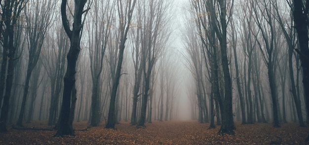 Scary forest with fog