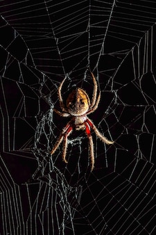 Страшный золотой шар-ткач паук в середине паутины на черном фоне.