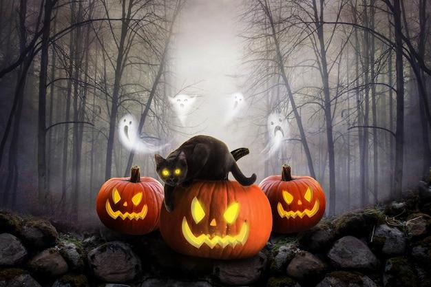 Страшные тыквы и темный лес с привидением и черной кошкой на фоне хэллоуина