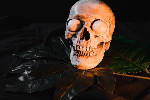 Cranio spaventoso con bulbi oculari bianchi su foglia