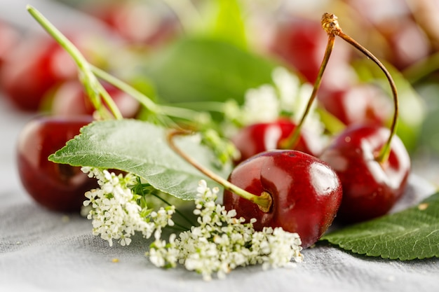 나무 흰색 배경에 흩어져 딸기와 벚꽃 잎
