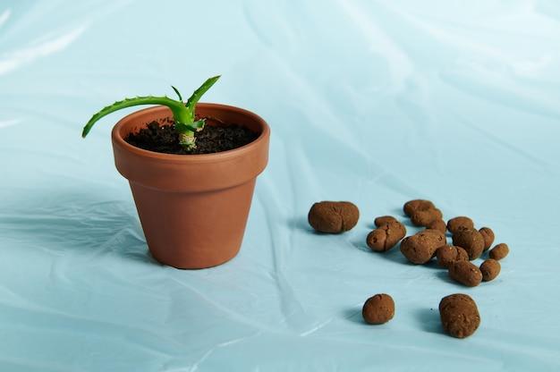 散在する膨張した粘土、アロエの花が付いている土鍋の隣の透明なフィルムの植物のための排水