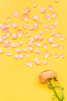 Scattered petals and buttercup flower