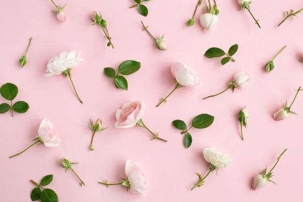 Разбросанные розовые розы цветы на пастельном фоне