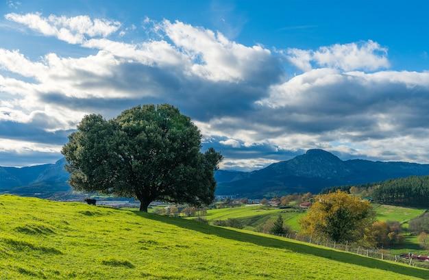 A scene of alone tree in a hill of berriz neighborhood