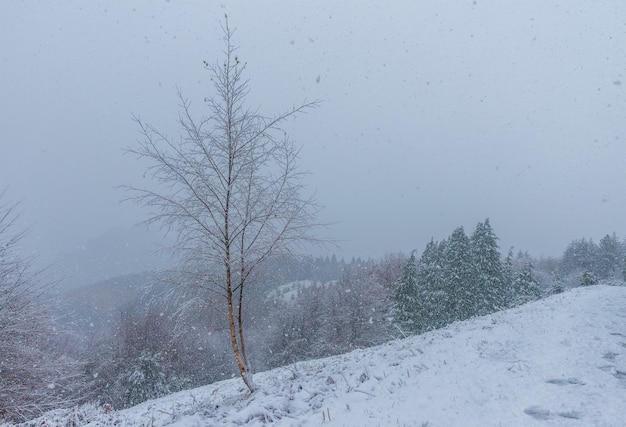 Scene of a lonely tree in a snowy day in natural park of urkiola