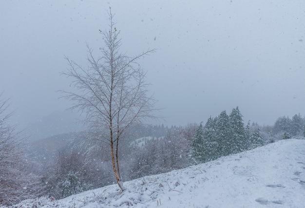 Сцена одинокого дерева в снежный день в природном парке уркиола