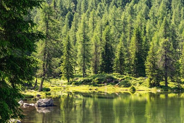 Пейзаж альпы с зеленым лесом и озером