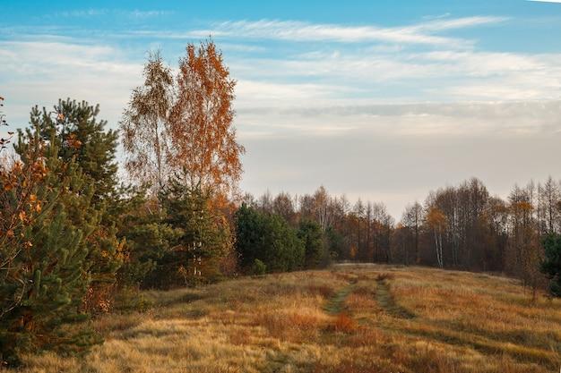 풍경 가을 숲. 맑은 숲. 10 월 자연 풍경. 햇빛에 아름 다운 밝은 숲.