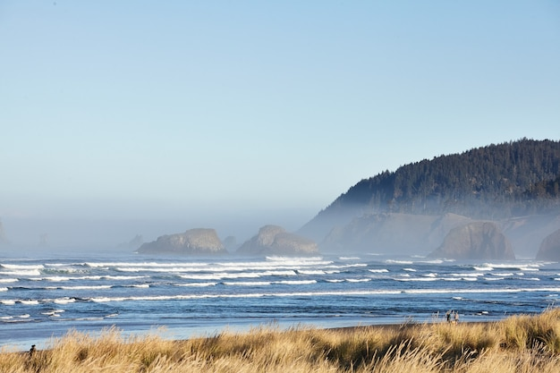 Scenery of beach grass in the morning at cannon beach, oregon