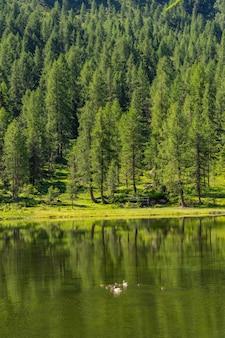 Пейзажный пейзаж с зеленым лесом и озером