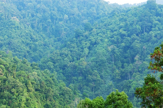 Scenery of the mountains in tropical rainforest abundant nature in asia thailand.