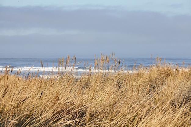 オレゴン州キャノンビーチでの朝のビーチグラスの風景
