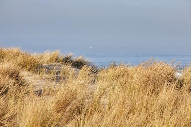 Пейзаж пляжной травы утром в кэннон-бич, орегон