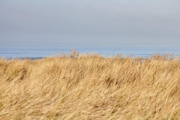 오레곤 캐논 비치에서 아침에 beachgrass의 풍경