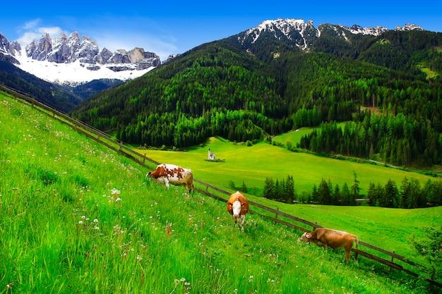 ドロミテの山々、緑の草の牧草地、牛の風景。イタリア、アルプス