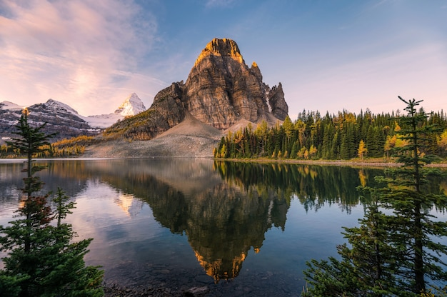 Scenery of sunburst lake and mount assiniboine reflections between pine tree at sunrise