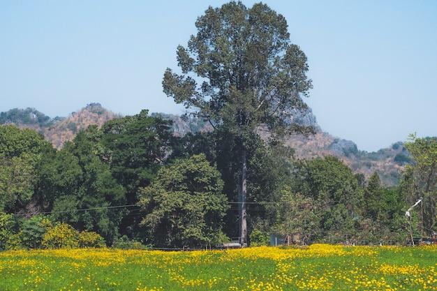 가을을 대표하는 코스모스가 있는 풍경. 들판에 피는 노란 꽃, 빈티지한 따뜻한 음색. 자유롭고 즐거운 개념 아이디어 배경