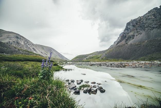 灰色の曇り空の下の山の谷の沼沢地の山の湖の近くにラークスパーの花が咲く風光明媚な高山の風景。どんよりした天気で高地の水浸しの湖と大気の山の風景。
