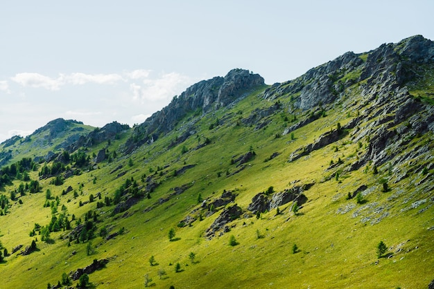 Scenic alpine landscape with green mountainside with conifer forest and big crags. vivid green mountain scenery with coniferous trees and big rocks on hillside. big stones and trees on steep slopes.