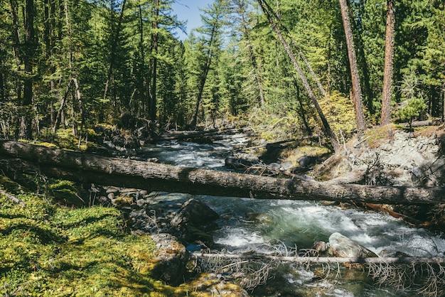 日差しの中で野生の秋の森の山の川と風光明媚な高山の風景。晴れた日には木々や茂みに囲まれた美しい川のある鮮やかな秋の風景。秋の森の中の山の小川。