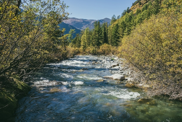 Scenic alpine landscape with mountain river in wild autumn forest in sunshine. vivid autumn scenery with beautiful river among trees and thickets in sunny day. mountain brook in woods in fall time.