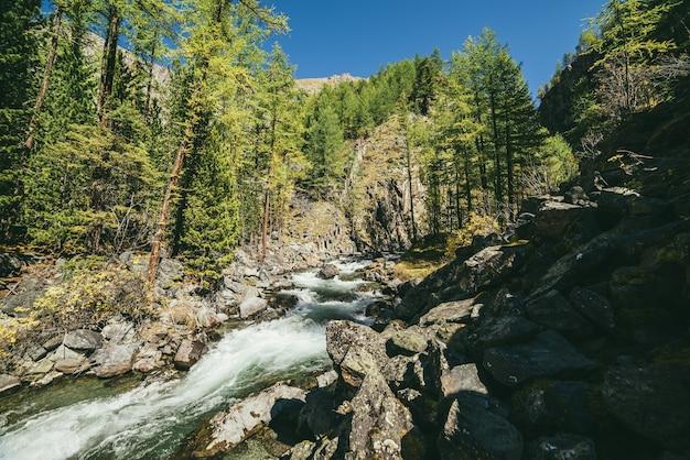 日差しの中で岩の間の森の中で強力な山川のある風光明媚な高山の風景。晴れた日の山の美しい川と鮮やかな秋の風景。岩壁近くの乱流の急流。