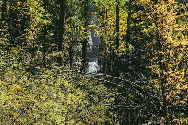 화창한 가을 숲의 바위 사이에 있는 아름다운 폭포에 이르는 노란 잎을 통해 경치 좋은 고산 전망. 가을철 햇살에 노란색 빽빽한 덤불과 물줄기가 있는 다채로운 산 풍경.