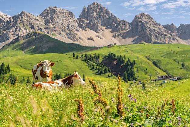 Живописные альпы с коровой на зеленом поле
