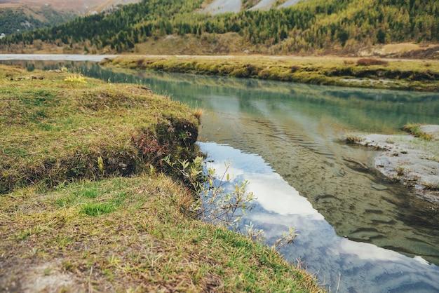 黄色い草の中に山の小川がある風光明媚な秋の風景。ターコイズブルーの澄んだ水の流れと黄金色の美しい風景。小川の透明な水の中の緑の波紋砂底。