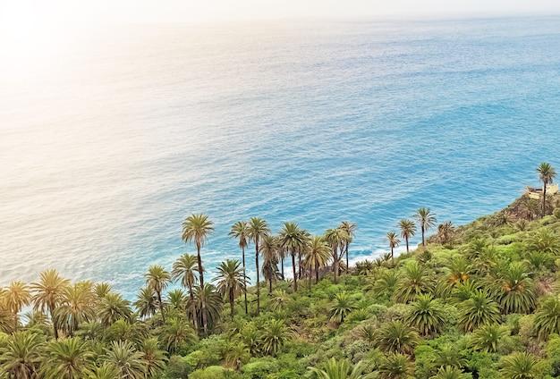 Живописный берег океана с множеством пальм в солнечный день