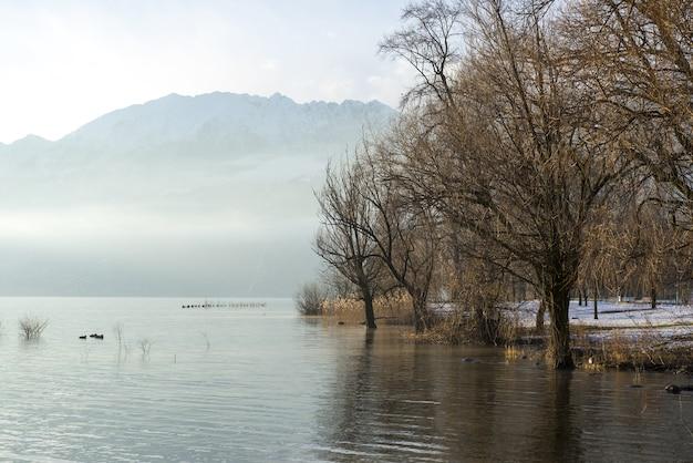 裸の木のある風光明媚な霧の湖